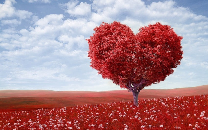 Amare l'Amore, l'Amore ama